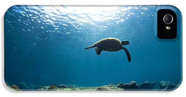 Turtle iPhone 5 Case - Contemplation by Sean Davey