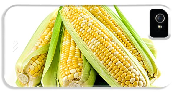 Corn Ears On White Background IPhone 5 Case by Elena Elisseeva