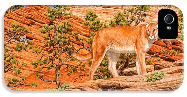 Cougar - Don't Move IPhone 5 Case by Crista Forest
