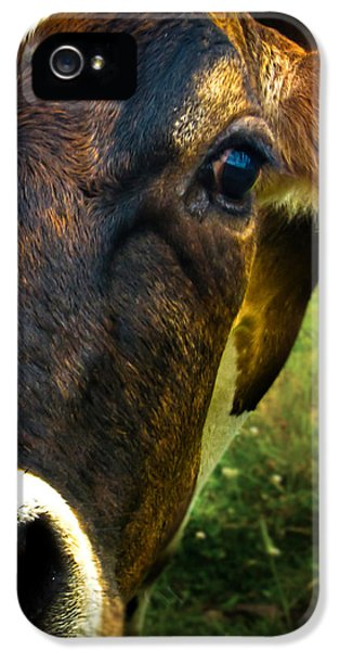 Cow Eating Grass IPhone 5 Case