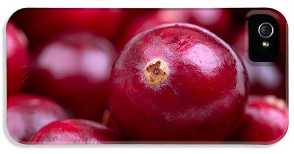 Cranberry Closeup IPhone 5 Case by Jane Rix