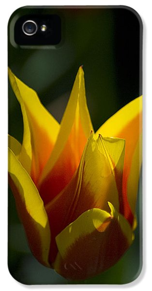 Crown Tulip IPhone 5 Case by Yulia Kazansky
