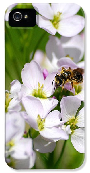 Cuckoo Flowers IPhone 5 Case by Christina Rollo