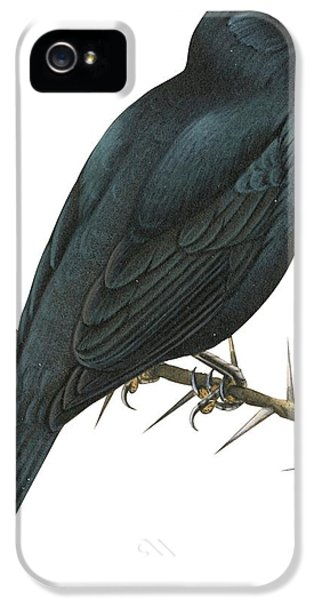 Cuckoo Shrike IPhone 5 Case by Anonymous
