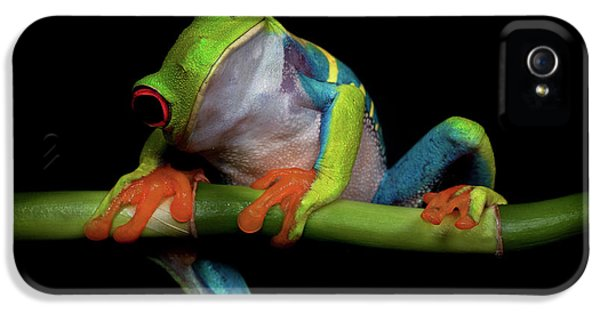 Amphibians iPhone 5 Case - Curiosity by Ferdinando Valverde