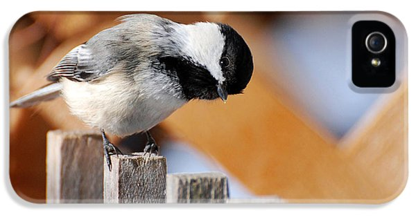Curious Chickadee IPhone 5 Case