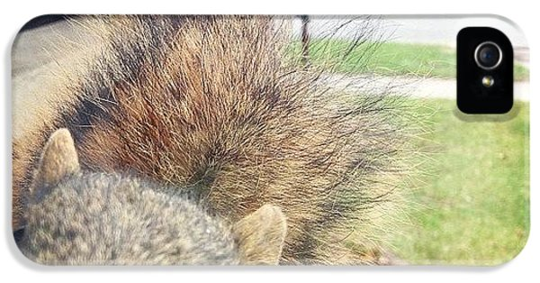 Animal iPhone 5 Case - Curious Squirrel by Christy Beckwith