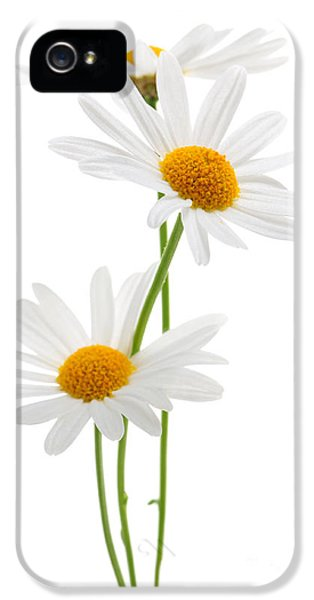 Daisies On White Background IPhone 5 Case by Elena Elisseeva