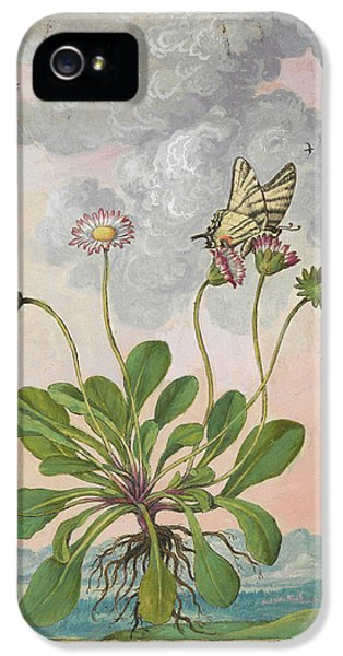 Daisy (bellis Perennis) IPhone 5 Case by British Library