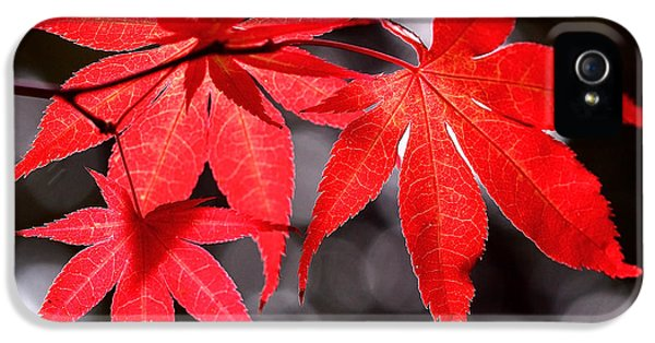 Dancing Japanese Maple IPhone 5 Case