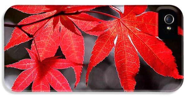Dancing Japanese Maple IPhone 5 Case by Rona Black