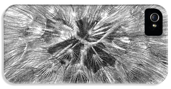 Dandelion Fireworks In Black And White IPhone 5 Case
