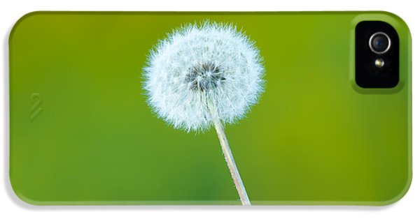 Dandelion IPhone 5 Case by Sebastian Musial