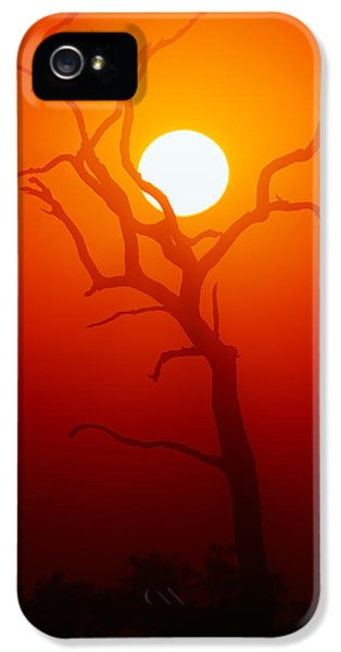 Dead Tree Silhouette And Glowing Sun IPhone 5 Case by Johan Swanepoel