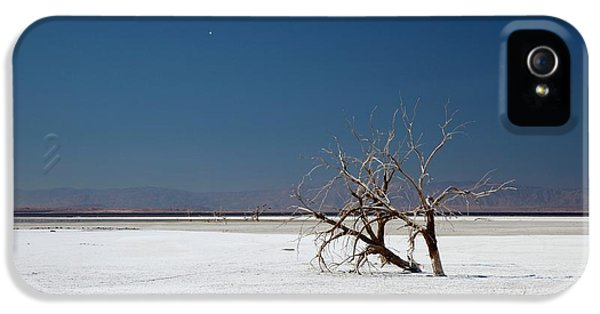 Dead Trees On Salt Flat IPhone 5 Case