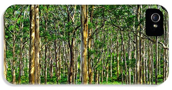 Deep Forest IPhone 5 Case by Az Jackson