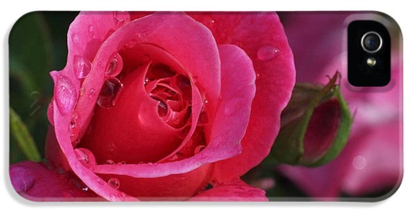 Deep Pink Beauty IPhone 5 / 5s Case by Rona Black
