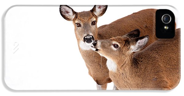 Deer Kisses IPhone 5 Case