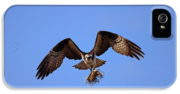 Osprey iPhone 5 Case - Delivery By Air by Mike  Dawson