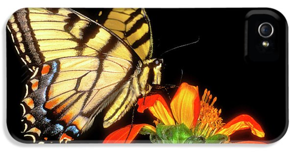 Detail Of A Captive Western Tiger IPhone 5 Case by Jaynes Gallery