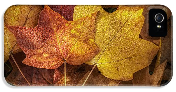 Dew On Autumn Leaves IPhone 5 Case