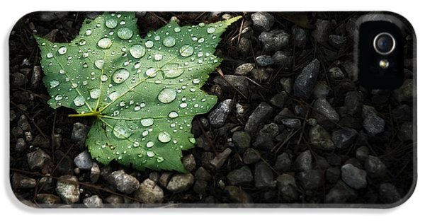 Dew On Leaf IPhone 5 Case