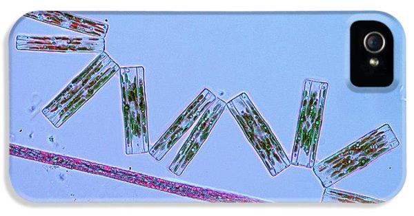 Diatoms And Cyanobacteria IPhone 5 Case by Marek Mis