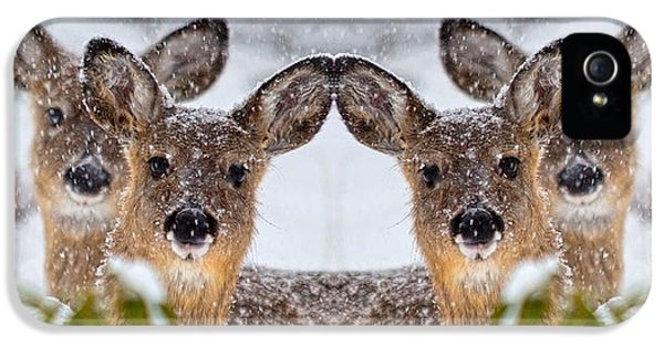 Doe You See Me IPhone 5 Case by Betsy Knapp