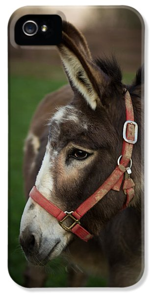 Donkey IPhone 5 Case by Shane Holsclaw