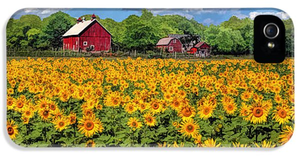 Door County Field Of Sunflowers Panorama IPhone 5 Case by Christopher Arndt