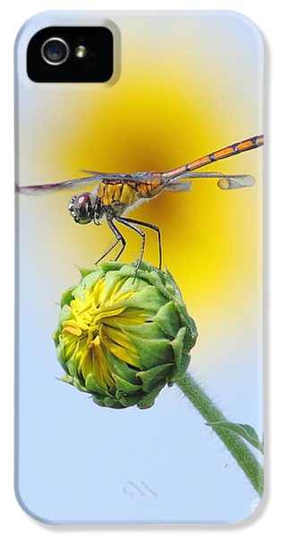 Nebraska iPhone 5 Case - Dragonfly In Sunflowers by Robert Frederick