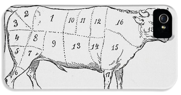 Drawing Of A Bullock Marked To Show Eighteen Different Cuts Of Meat IPhone 5 Case