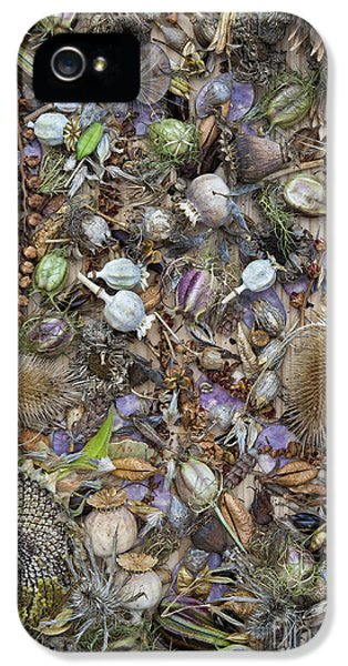 Dried Flower Seeds IPhone 5 Case by Tim Gainey