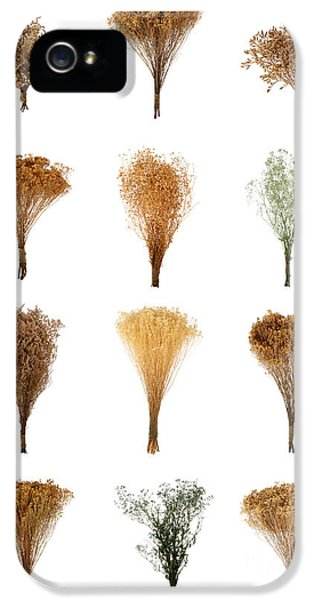 Dried Flowers Collection IPhone 5 Case