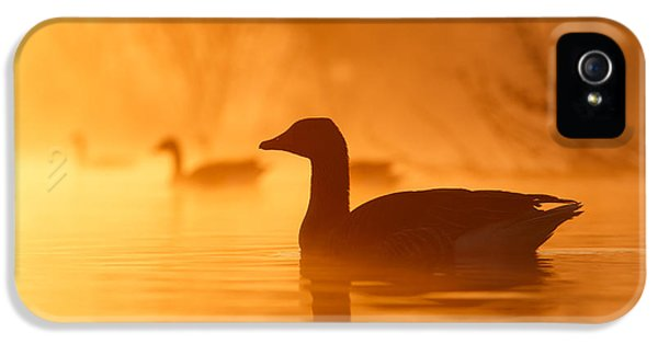 Geese iPhone 5 Case - Early Morning Mood by Roeselien Raimond
