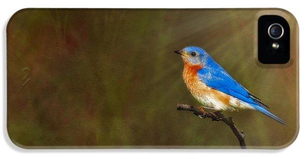 Eastern Bluebird In The Prairies IPhone 5 Case by Susan Candelario