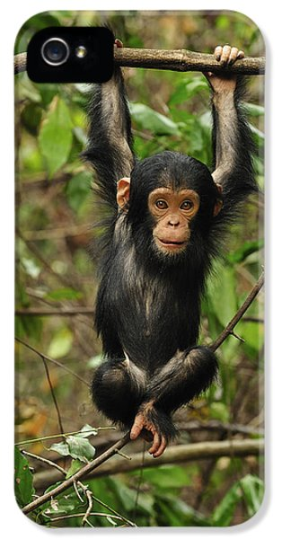 Eastern Chimpanzee Baby Hanging IPhone 5 / 5s Case by Thomas Marent