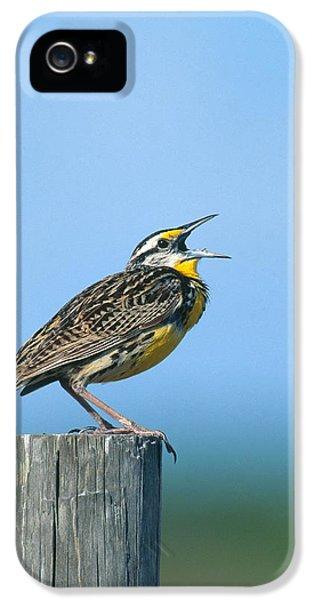 Eastern Meadowlark IPhone 5 Case by Paul J. Fusco