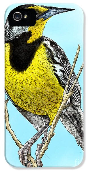 Eastern Meadowlark IPhone 5 / 5s Case by Roger Hall