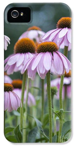 Echinacea Purpurea IPhone 5 Case