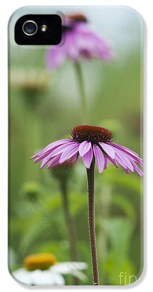 Echinacea Purpurea Magnus  IPhone 5 Case