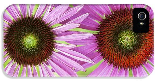 Echinacea Purpurea Rubinglow Pattern IPhone 5 Case