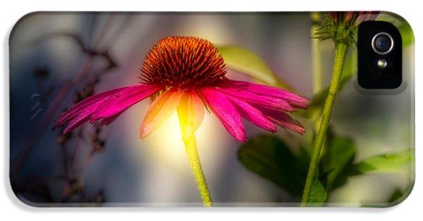 Echinacea Sunrise IPhone 5 Case