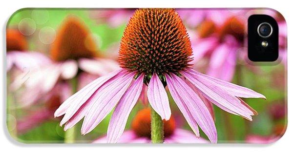Echinacea IPhone 5 Case