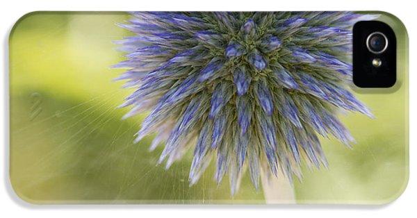 Echinops Blue IPhone 5 Case