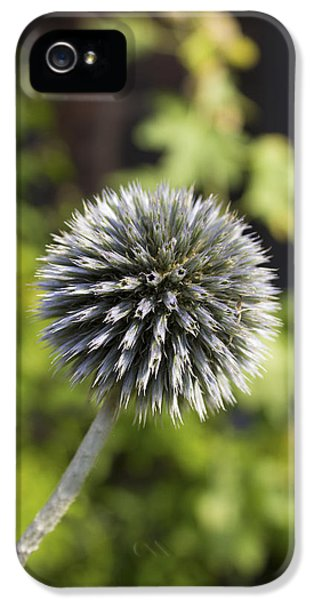 Echinops IPhone 5 Case by Ian Mitchell
