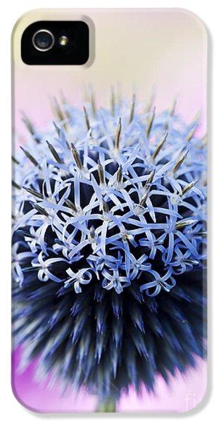 Echinops Ritro Veitchs Blue Flower IPhone 5 Case by Tim Gainey