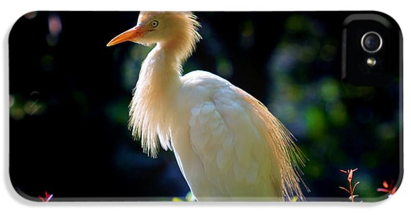 Egret With Back Lighting IPhone 5 Case by Zoe Ferrie