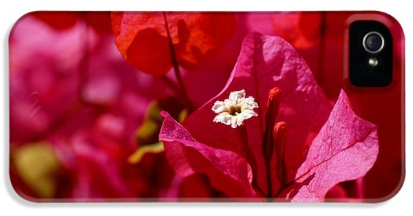 Electric Pink Bougainvillea IPhone 5 Case by Rona Black