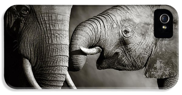Elephant Affection IPhone 5 Case by Johan Swanepoel